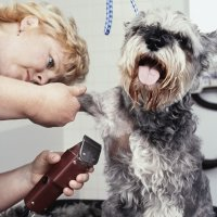 Start Your Own Home-Based Pet Grooming Business