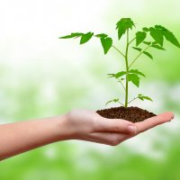Start Your Own Green Business